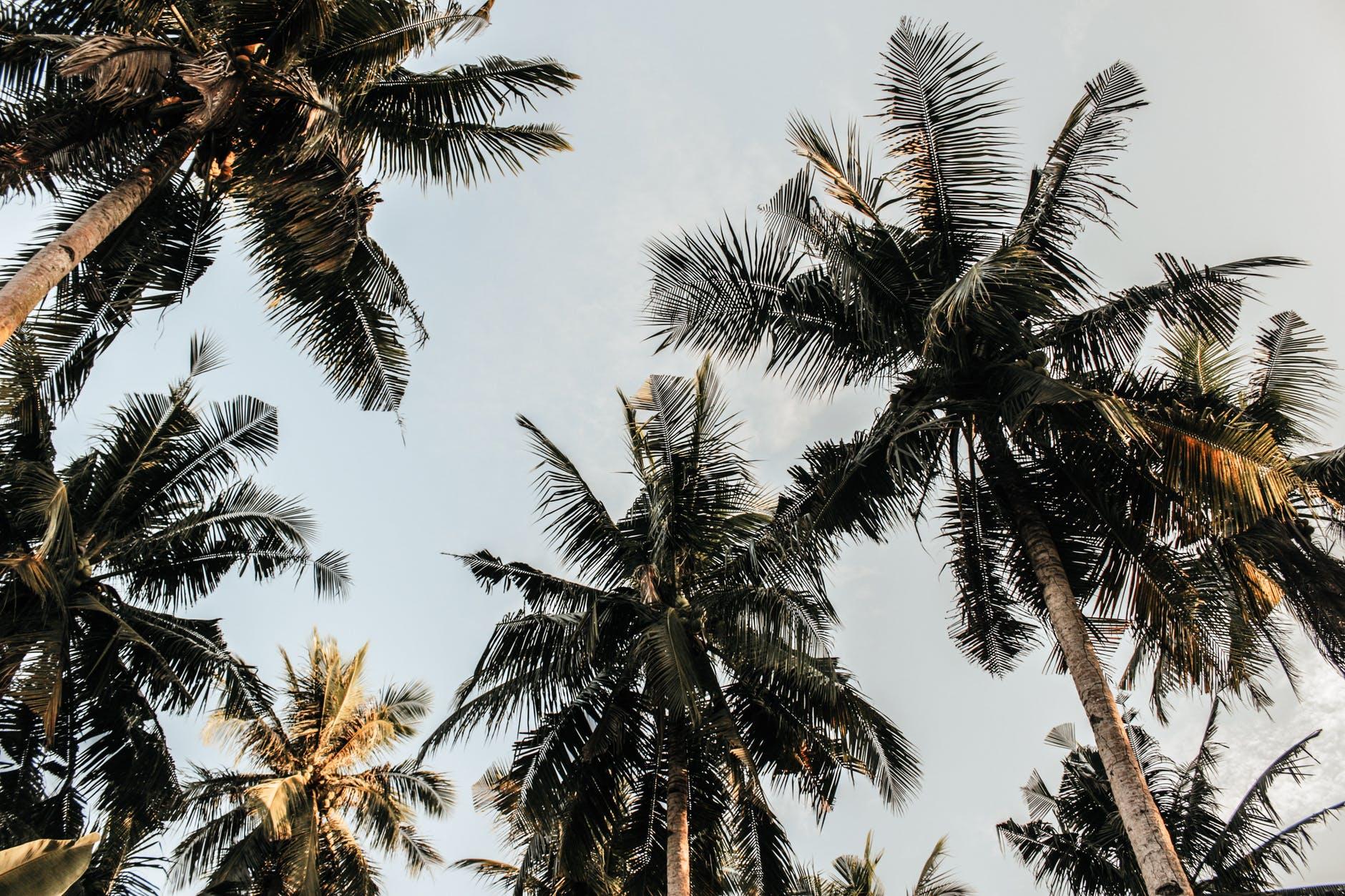 Filmfestival unter Palmen